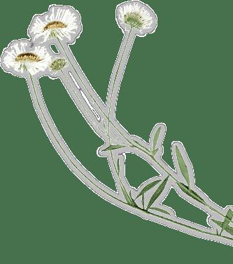 特徴 花の画像