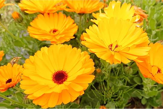 ギャラリー写真 花